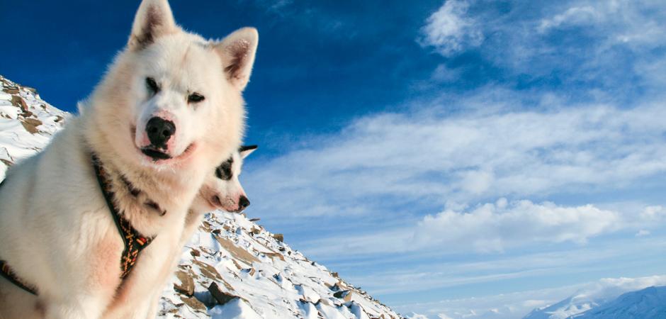 Startbild_Spitzbergen